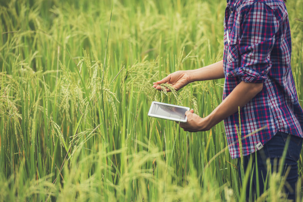 farmer-standing-rice-field-with-tablet_1150-6059