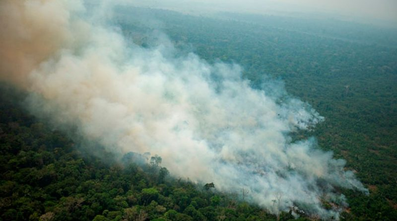 How the fire burned in the Amazon Forest ?