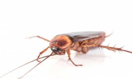 Bed Bug Control Methods