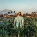 Corn Crop Yields